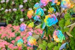 Beau des roses d'arc-en-ciel Images libres de droits