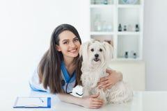 Beau docteur vétérinaire de sourire et chien blanc mignon Image libre de droits