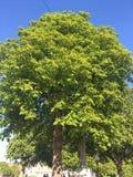 Beau et étonnant arbre photo libre de droits