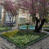 Beau et beau yard personnel d'une vie orientale Images libres de droits