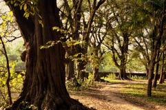 Beau et historique arbre Images stock