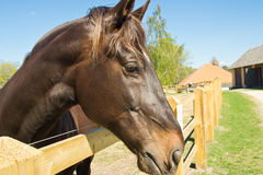 Beau et intense cheval photographie stock