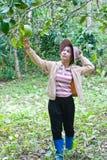 Beau femme travaillant dans le jardin de pamplemousse. Images stock