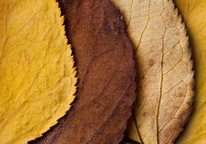 Beau feuillage d'automne images libres de droits