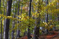 Beau feuillage de paysage et d'automne de montagne Photographie stock libre de droits