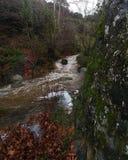 Beau fleuve images libres de droits