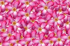 Beau floral Photographie stock libre de droits