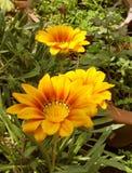 Beau florwer frais, sentiment frais photographie stock libre de droits