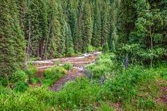 Beau flot de montagne Photo libre de droits