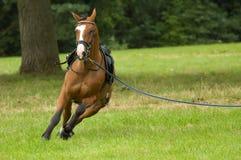 Beau fonctionnement de cheval photographie stock