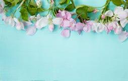 Beau fond avec des fleurs d'Apple photos libres de droits