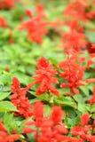 Beau fond avec des fleurs de rouge d'été Image libre de droits
