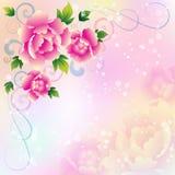 Beau fond avec des roses Photo libre de droits