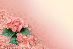 Beau fond avec l'hortensia image stock