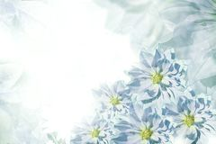 Beau fond blanc turquoise floral Composition de fleur Carte de voeux pour les vacances des fleurs des dahlias Photos libres de droits