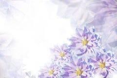 Beau fond bleu-blanc-rose floral Composition de fleur Carte de voeux pour les vacances des fleurs des dahlias Photographie stock