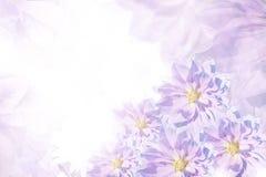 Beau fond bleu-blanc-rose floral Composition de fleur Carte de voeux pour les vacances des fleurs des dahlias Photo stock