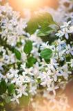 Beau fond d'été avec de petites fleurs blanches Ton chaud Photographie verticale image stock