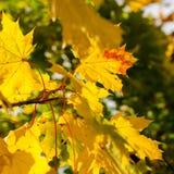 Beau fond d'automne avec des feuilles de vert et de jaune Photographie stock