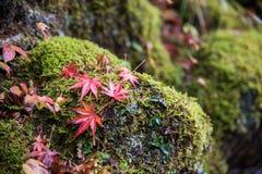 Beau fond d'automne avec des lames d'érable Images libres de droits