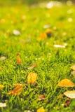 Beau fond d'automne Feuilles de jaune sur l'herbe verte Image stock