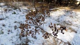 Beau fond d'usine L'hiver plante le fond Paysage de nature de forêt d'hiver Champ blanc vert Photo libre de droits