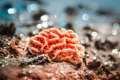 Beau fond de Coral Colored Seashell At A image stock