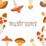 Beau fond de couleur lumineuse avec différents champignons Photographie stock