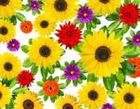 Beau fond de fleur Photographie stock