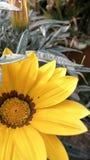 Beau fond de fleur photos stock