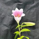 Beau fond de fleur fraîche Fleurs de bouquet de fleur d'amour Billet de banque remodelé nouvelle par libération du dollar Photos libres de droits
