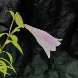Beau fond de fleur fraîche Fleurs de bouquet de fleur d'amour Billet de banque remodelé nouvelle par libération du dollar Photo stock