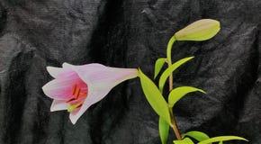 Beau fond de fleur fraîche Fleurs de bouquet de fleur d'amour Billet de banque remodelé nouvelle par libération du dollar Image stock