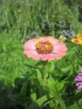 Beau fond de fleur fraîche Fleurs de bouquet de fleur d'amour Billet de banque remodelé nouvelle par libération du dollar Images libres de droits