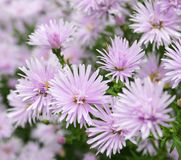 Beau fond de fleurs Photos libres de droits