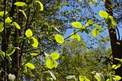 Beau fond de forêt Photos libres de droits