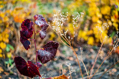 Beau fond de nature Photo libre de droits