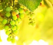 Beau fond de raisin image stock