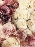Beau fond de Rose de vintage fleur blanche, rose, pourpre, violette, crème de bouquet de couleur Style élégant floral Images libres de droits