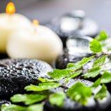 Beau fond de station thermale de fougère, de glace et de bougies vertes de brindille dessus Image stock