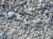 Beau fond des coquilles de mer photo libre de droits