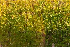 Beau fond des feuilles d'automne dans le jardin images stock