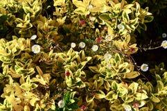 Beau fond des feuilles et des marguerites jaunes photographie stock libre de droits