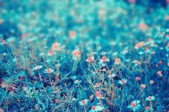 Beau fond floral bleu Photo libre de droits