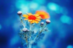 Beau fond floral bleu Image libre de droits