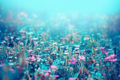 Beau fond floral bleu Images stock