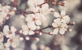 Beau fond floral de fond… avec les fleurs colorées photos libres de droits