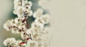 Beau fond floral de fond… avec les fleurs colorées D'été d'heure toujours scène de la vie avec les fleurs pelucheuses, macro vue  images libres de droits