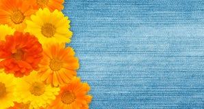 Beau fond floral de vintage Photographie stock libre de droits
