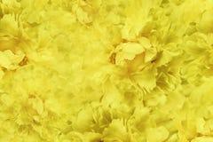 Beau fond jaune floral Papiers peints de pivoine jaune de fleurs Composition de fleur Plan rapproché Images stock